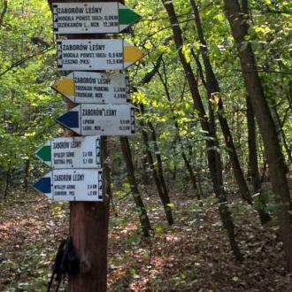 Niedzielne 31 km przez KPN
